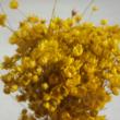 Glixia - sárga, 5g