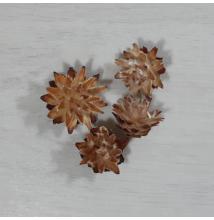 Plumosum fej - natúr, 4db