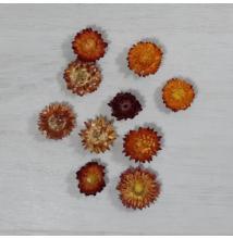 Szalmarózsa - narancs, 10db