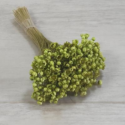 Glixia - zöld, 5g