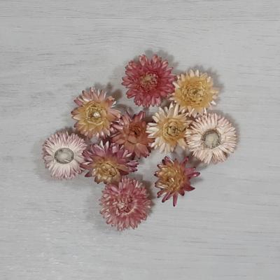 Szalmarózsa - rózsaszín, 10db