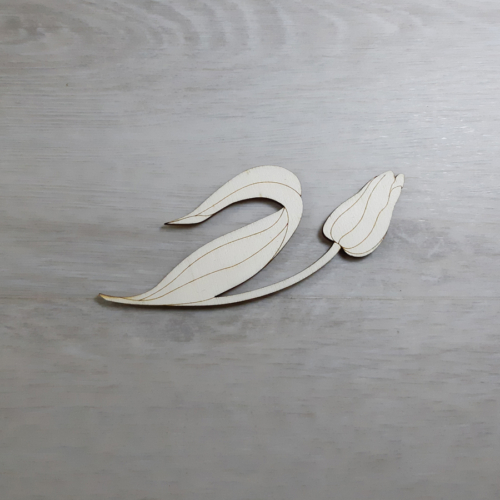 Tulipán 1 - 14cm, natúr
