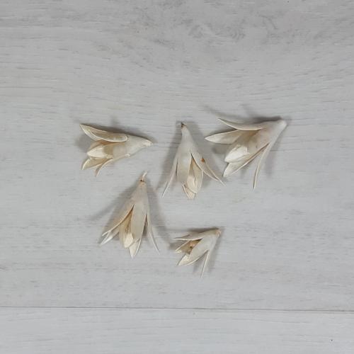 Csillag lili - fehér, 5db